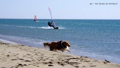 wind Report FR Leucate - Les Coussoules le 2016-07-25 15:00:00